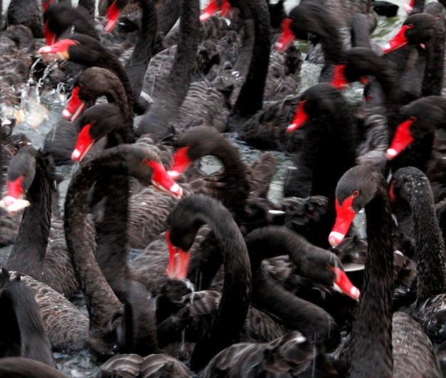 Feel the flock