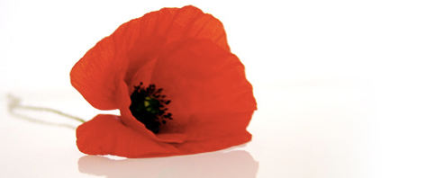 Rememberance Day II.png