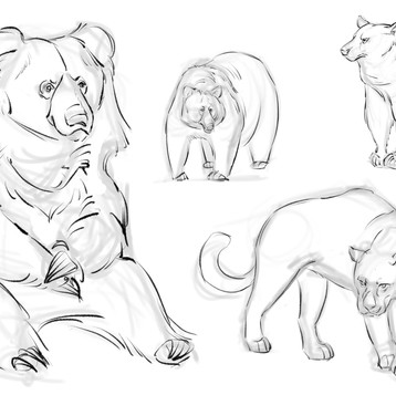 animal sketches 1.jpg