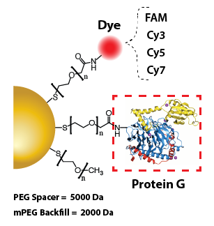 Gold Nanoparticles - Protein G
