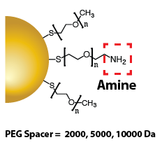 Gold Nanoparticles - Amine