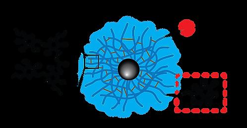 Dextran CLIO Magnetic Nanoparticles - Biotin, Fluorescent Dye