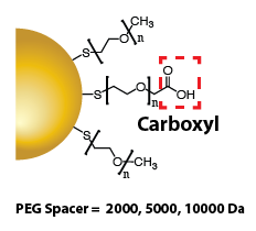 Gold Nanoparticles - Carboxyl