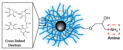 Dextran CLIO Magnetic Nanoparticles - Amine