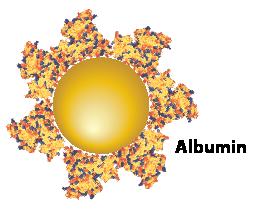 Gold Nanoparticles - Albumin