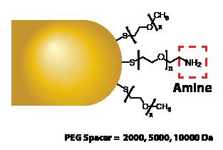 Gold Nanorods - Amine