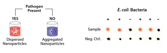 SensoGOLD Diagnostic Platform