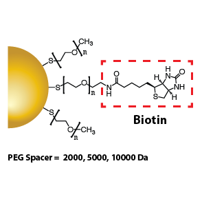 Gold Nanoparticles - Biotin