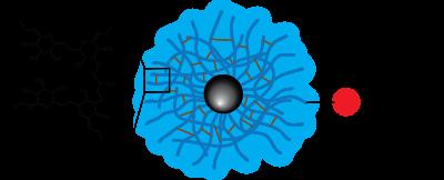 Dextran CLIO Magnetic Nanoparticles - Fluorescent Dye
