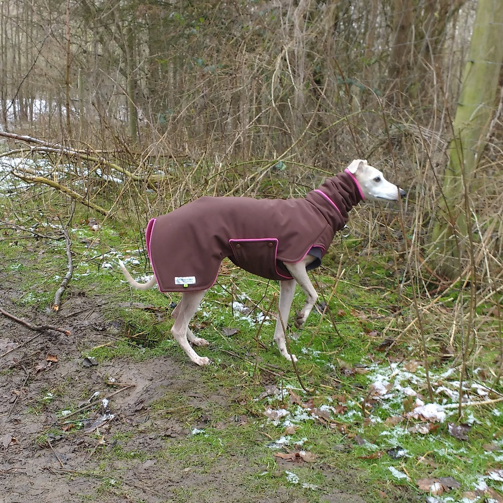 96ffade9b9b49 Winter Coat For Whippets-Padded Softshell
