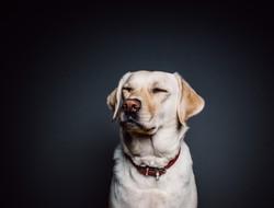 dog-820014_1920_edited