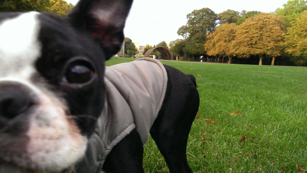 Our little pup, Olive - at Windsor Castle!