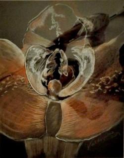 Erótica floral