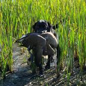 hunting_dog.jpg