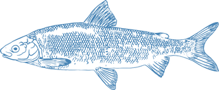 Whitefish_Blue_Website.png
