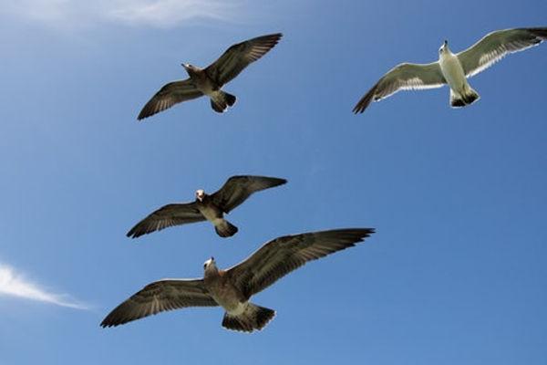 geese flying.jpg