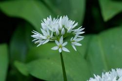 white flower high res.jpg