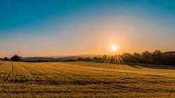 sunrise over field.jpg