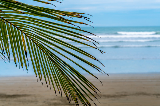 Palms & Waves 2
