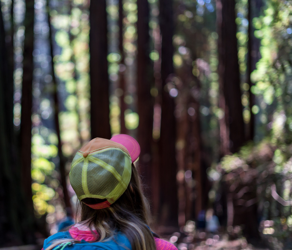 Hiking in Muir Woods National Monument