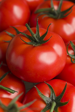 tomate-montfavet-624861-1.jpg
