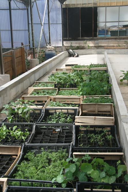 Des plants bio de fruits, légumes et fleurs pour le jardin