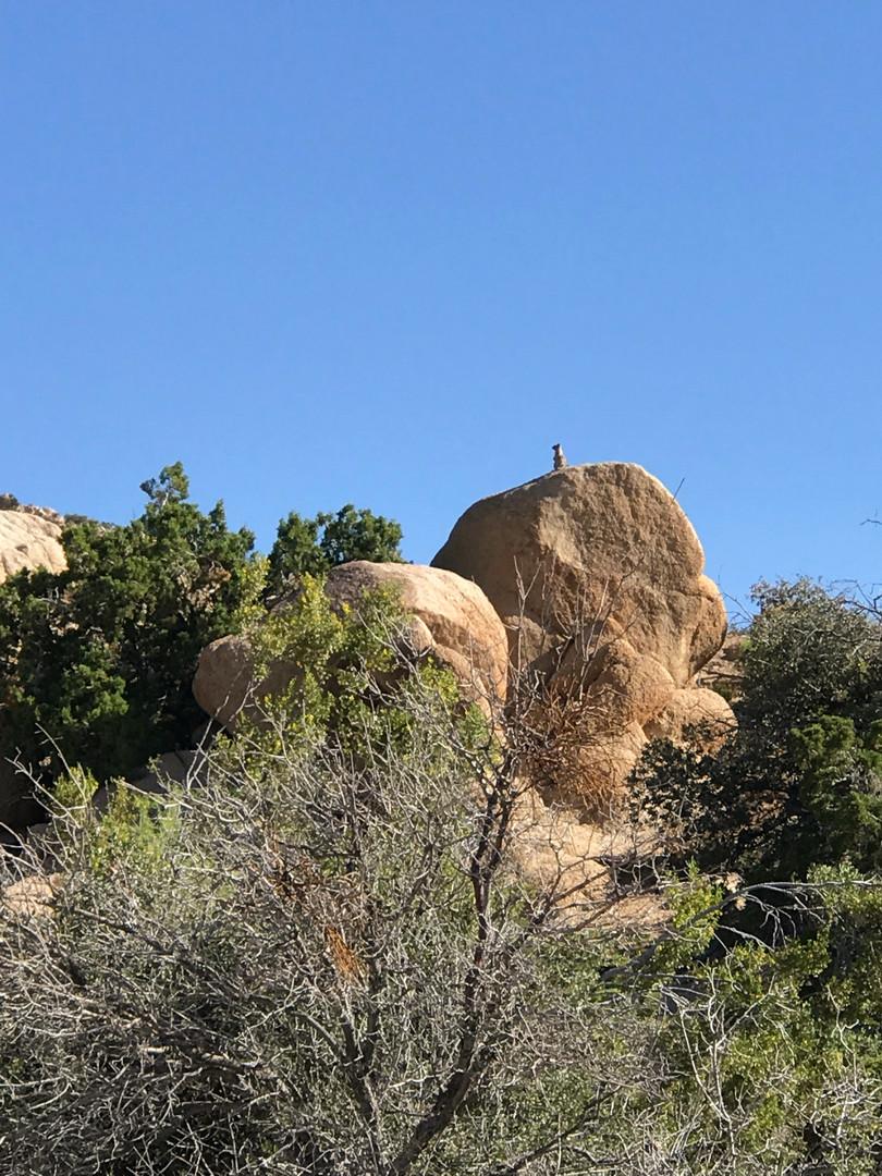 Boulders StarBeloved Temple Ranch
