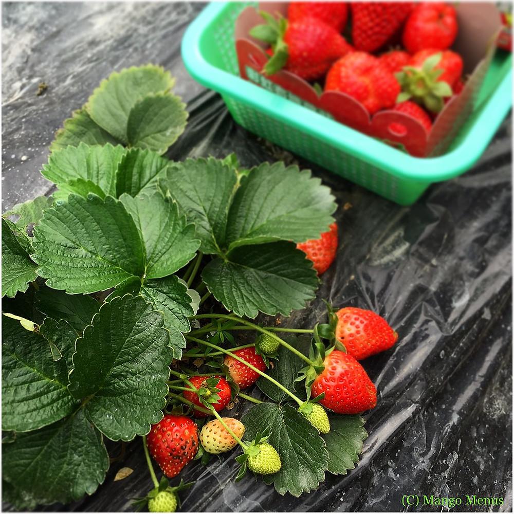 strawberrybox.jpeg