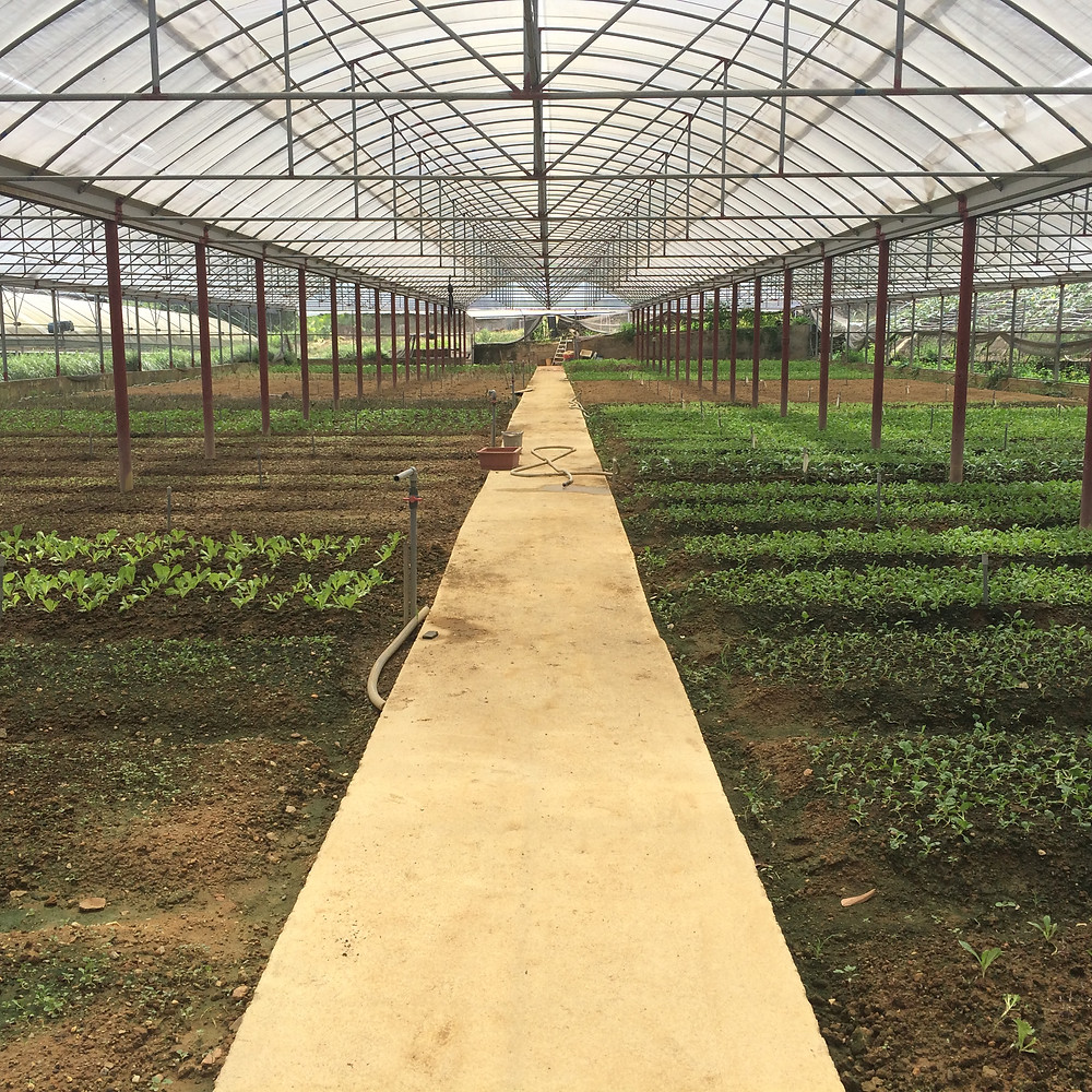 Zen Organic Farm Greenhouse for Homegrown Foods