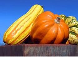 Best pumpkin ever!