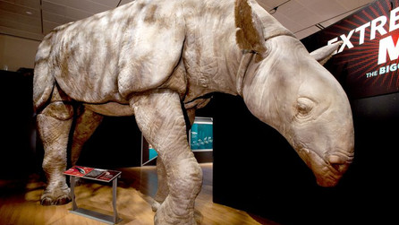 The largest mammals on Earth: Ancient Giant Chinese Rhinos were found!