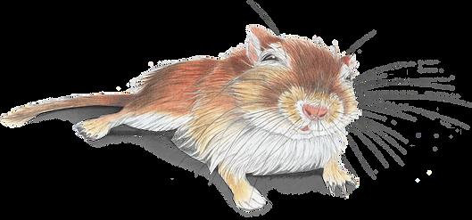 gerbil wild life illustration