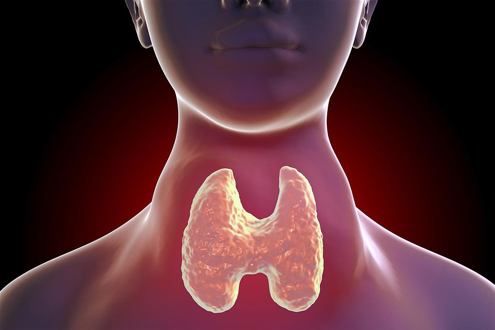Location of Your Thyroid Gland