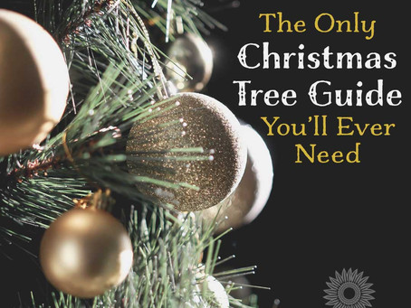 The Only Christmas Tree Care Guide You'll Ever Need