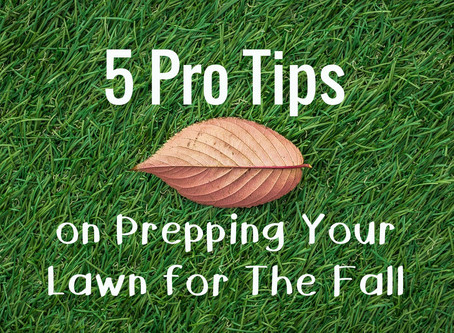 5 Pro Tips on Prepping Your Lawn for The Fall
