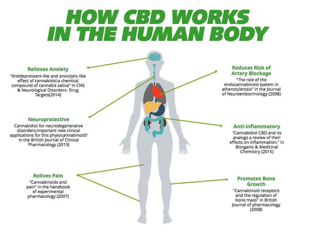 CBD receptors in our bodies