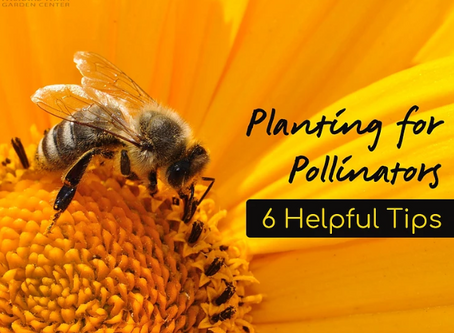 6 Tips for Planting a Garden Pollinators Will Love