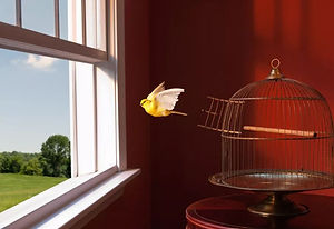 bird flying from cage out of an open window