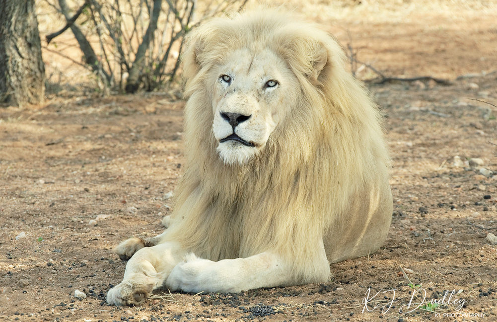 King Zukhara 2018.jpg