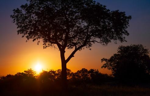 Timbavati sunset.jpg