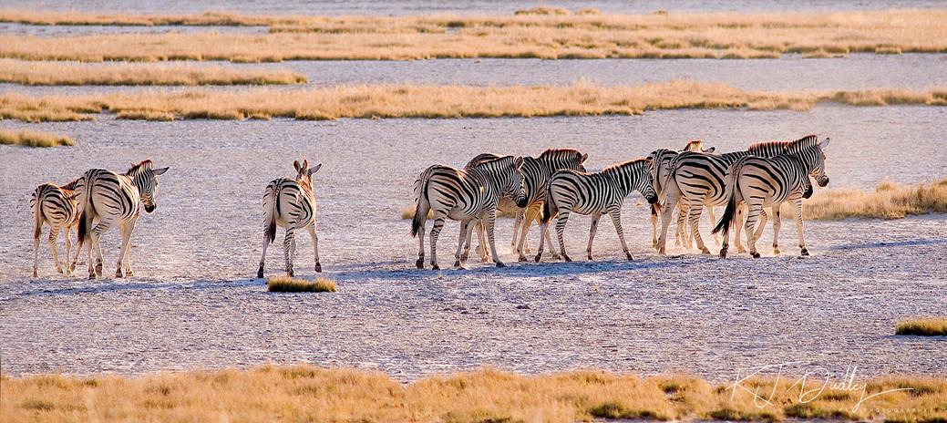 Kalahari crossing .jpg