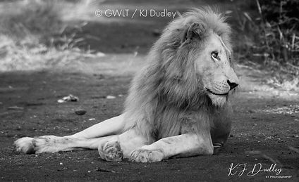 Majestic - A3 black and white - limited edition Giclee print