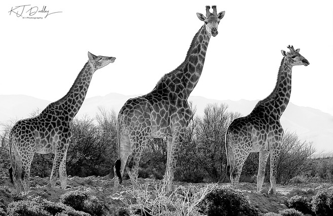 The three amigos.jpg