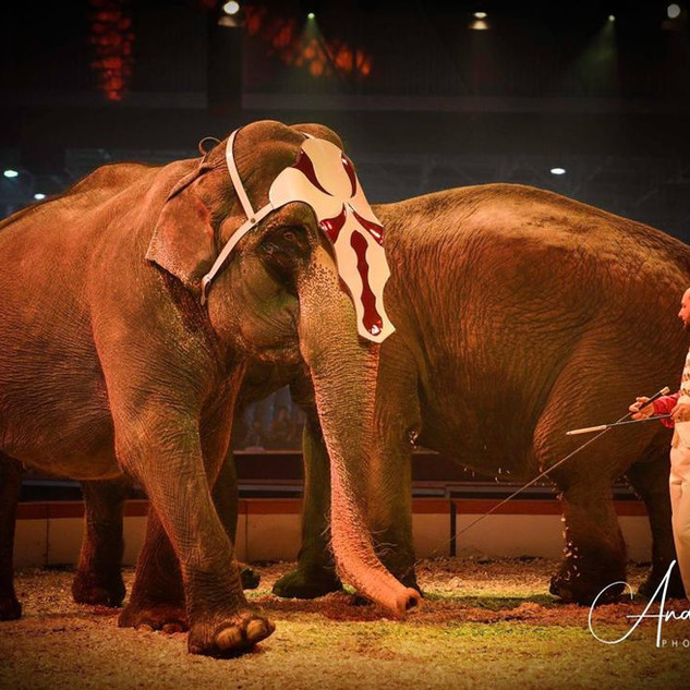 """Circus Renz """"American circus""""  Show tack for elephants. Photo is taken in Paris."""