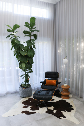 freshwater contemporary new build. Feature Eames leather black chair. Fiddle leaf tree. Cowhide rug.