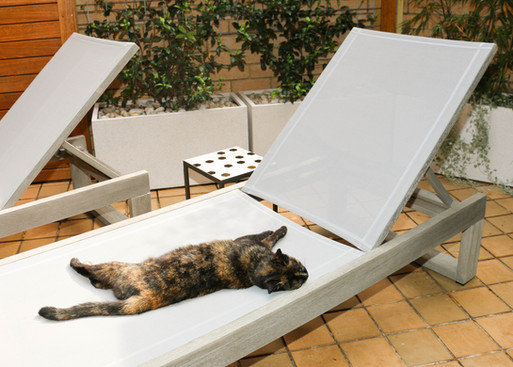 smCourtyard - lounger with cat.jpg