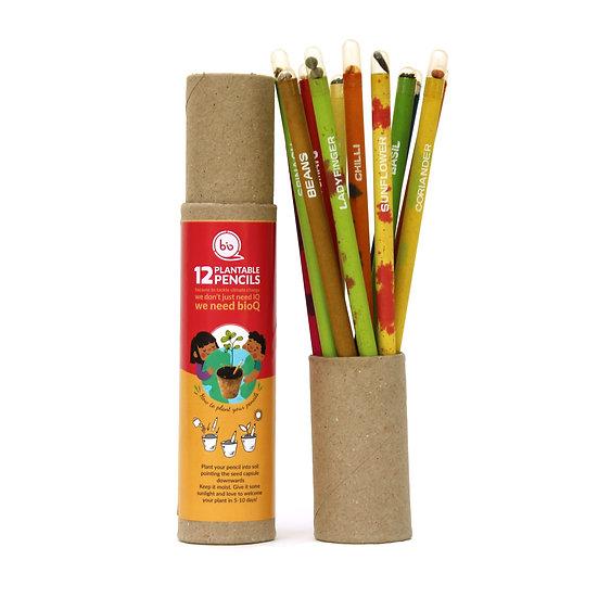 Seed pencil (12pc box)