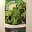 Thumbnail: Kalette 'Flower Sprout Mix'