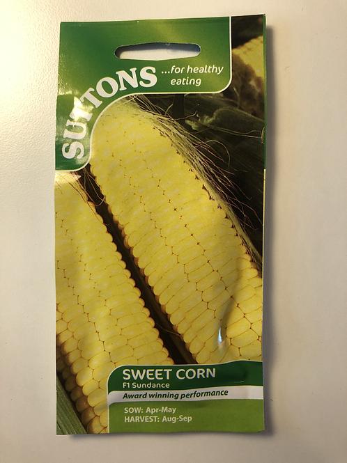 Sweet Corn F1 'Sundance'