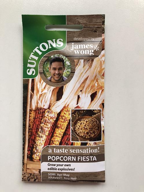 Popcorn 'Fiesta Sea mays'